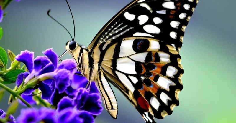 drugelio variantas pirkti binarinių opcionų kainos veiksmas minutėms